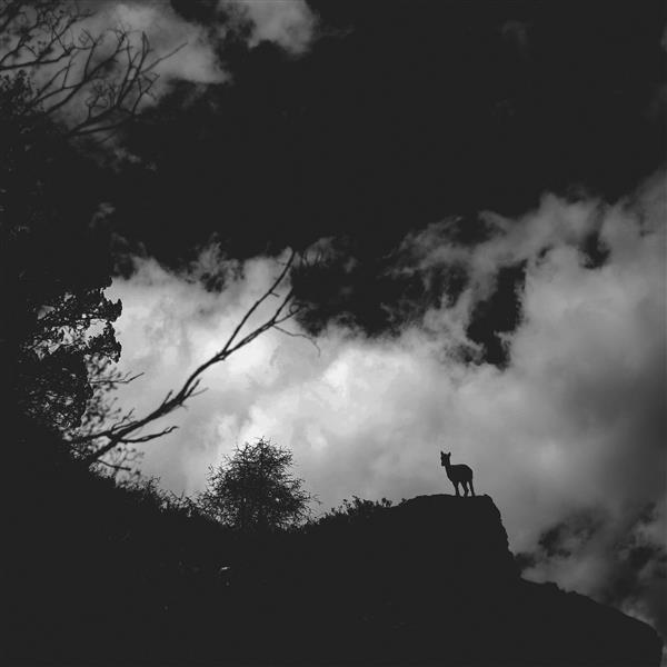 The creatures dream, 2017 - Chaokun Wang