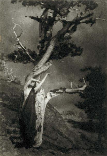 The Dying Cedar - Anne Brigman