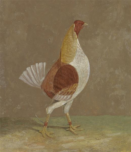 A Pale-breasted Fighting Cock, Facing Rght, 1829 - John Frederick Herring Sr.