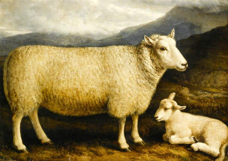 A Cheviot Lamb (from Attonburn, Roxburghshire) - William Shiels