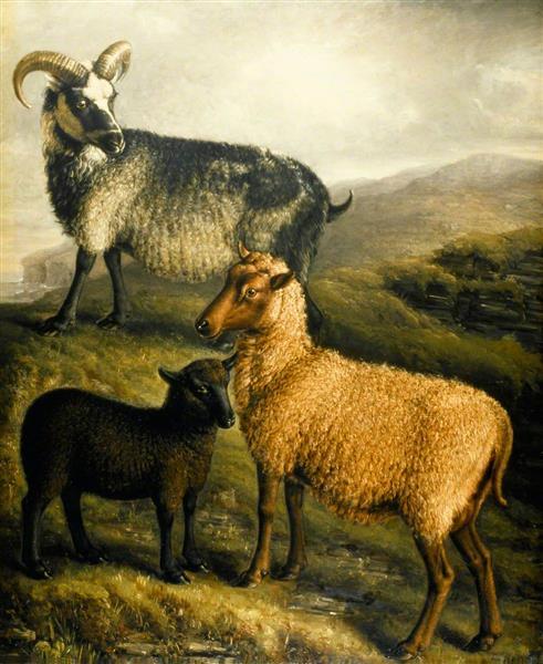 Orkney and Shetland Sheep - William Shiels