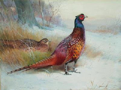 Old English Pheasant - Archibald Thorburn