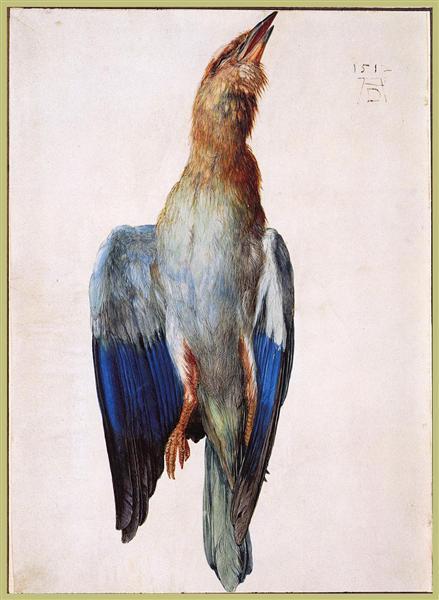 Dead Bluebird, 1512 - Albrecht Durer