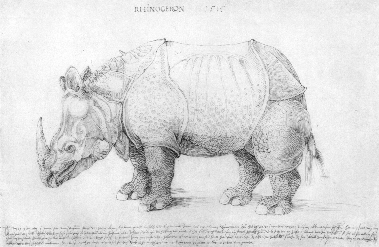 Rhinoceros Albrecht Dürer