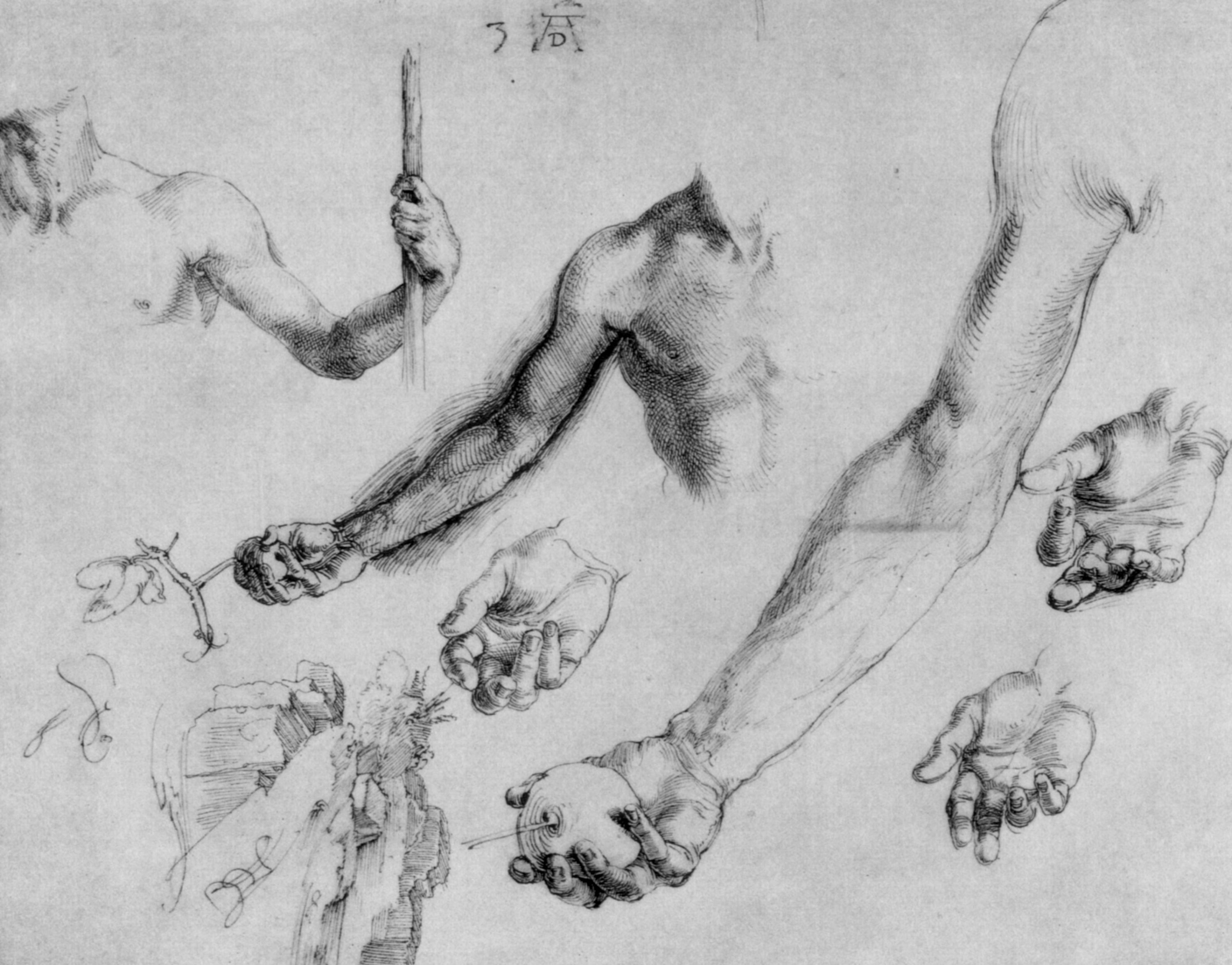 Study of male hands and arms - Albrecht Durer - WikiArt.org