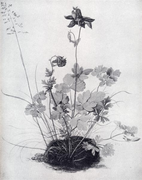 The Piece Of Turf With The Columbine, 1526 - Albrecht Durer