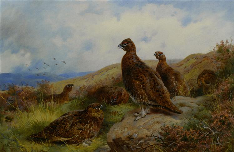 Red Grouse Packing, 1927 - Archibald Thorburn