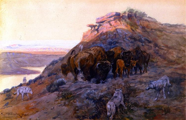 Buffalo Herd at Bay, 1901 - Charles M. Russell