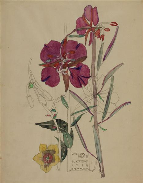 Willow Herb, Buxstead, 1919 - Charles Rennie Mackintosh