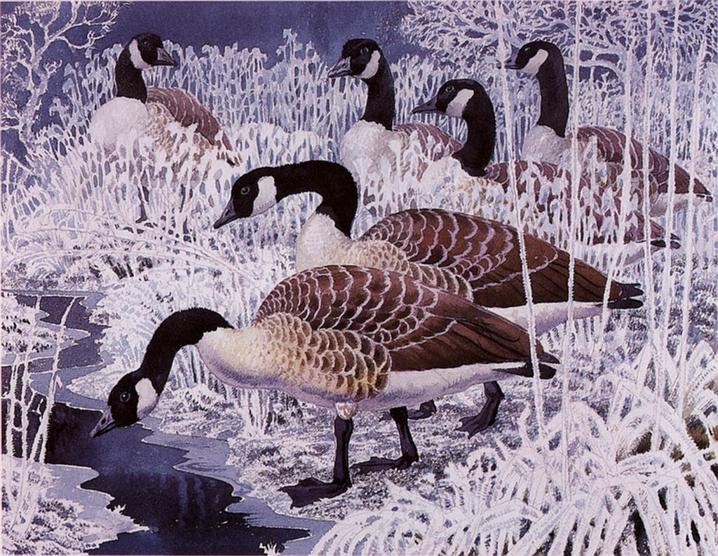 http://uploads4.wikiart.org/images/charles-tunnicliffe/geese-and-hoar-frost(1).jpg