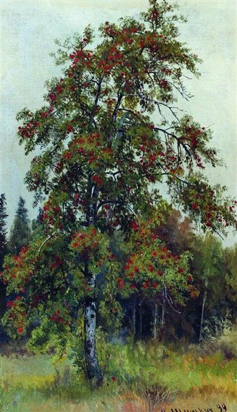 Rowan, 1892 - Ivan Shishkin