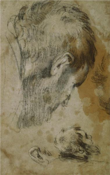 Two Studies of the Head of a Bearded Man, 1560 - Jacopo Bassano