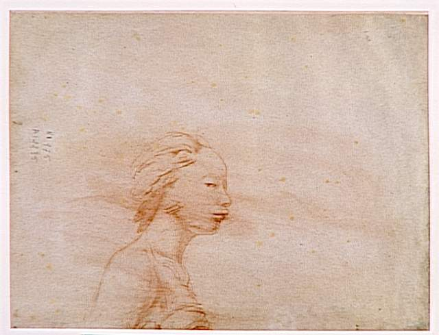 Female bust in profile to right - Jean Auguste Dominique Ingres