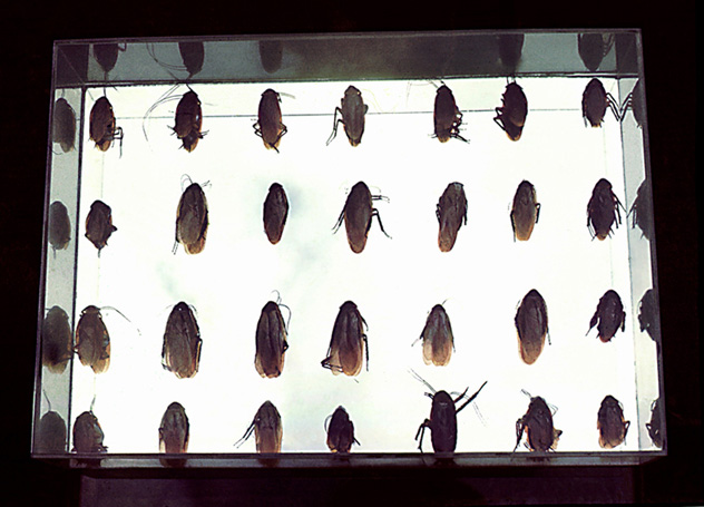 Box of Cockroaches, 1967 - Lygia Pape