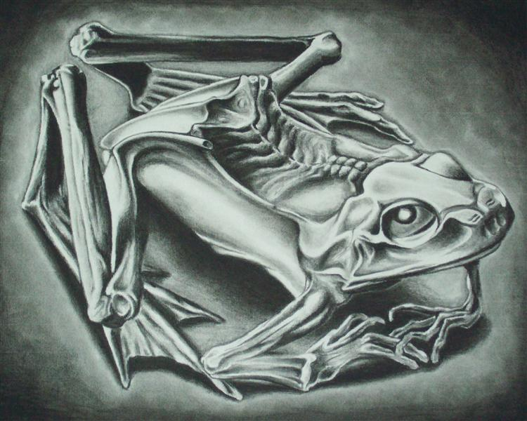 Mumified Frog, 1946 - M. C. Escher