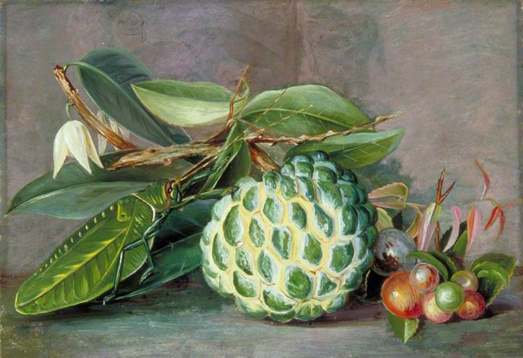 Custard Apple, Native 'Gooseberry' of Sarawak, and Leaf Locust, 1878 - Marianne North