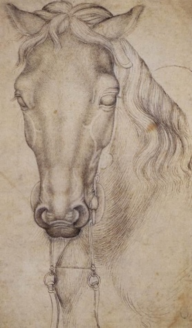 Study of the Head of a Horse, 1439