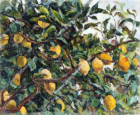 Italy. Lemons on the branches., 1924