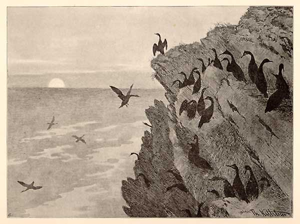 Cormorant, 1891 - Theodor Severin Kittelsen